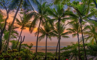 Caribbean, palms, tropical islands, sunset, evening, palms on the background of the sea, Costa Rica