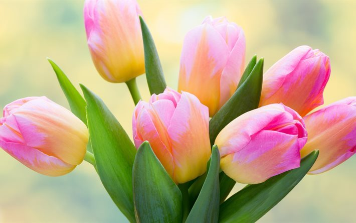 Download wallpapers pink tulips 4k spring flowers pink flowers pink tulips 4k spring flowers pink flowers tulips mightylinksfo