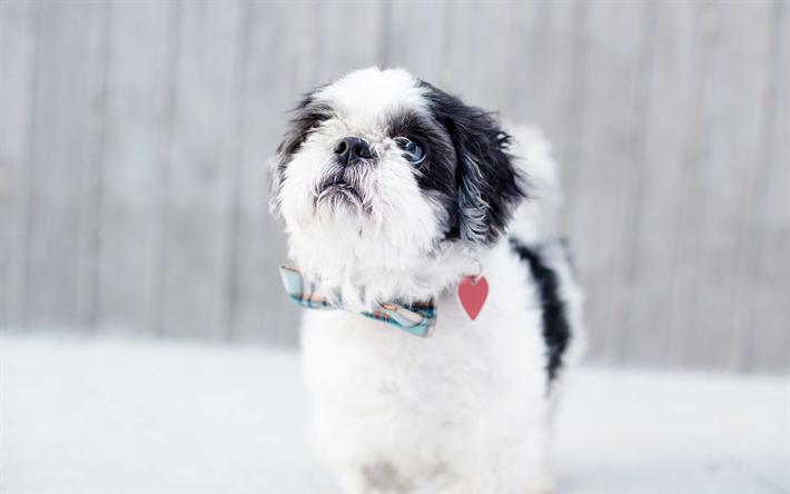 Download Shih Tzu Anime Adorable Dog - thumb2-4k-shih-tzu-cute-dogs-pets-fluffy-dog  Snapshot_746532  .jpg