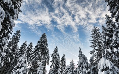 winter, evening, forest, snow-covered trees, blue sky, snow, winter landscape