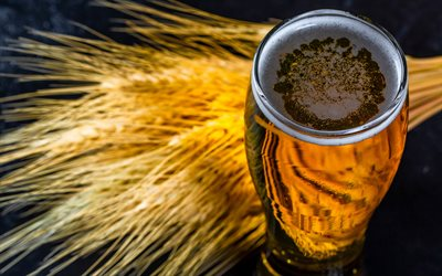 beer, large glass of beer, ears of barley, beer concepts