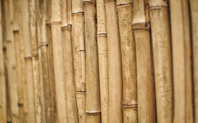 bamboo sticks, bokeh, brown bamboo, bamboo canes, bambusoideae sticks, macro, background with bamboo, bamboo