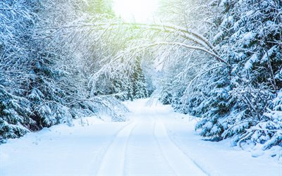 winter landscape, forest, road, snow, forest road, trees, white snow