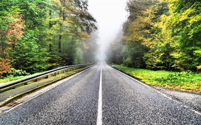 asphalt road, forest, fog, autumn, suspense concepts