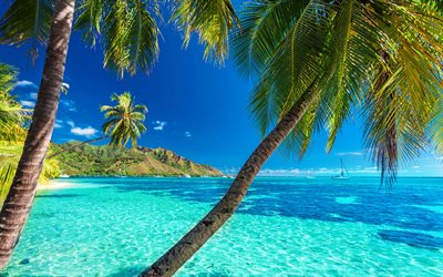 tropical islands, 4k, sea, palm trees, yachts, rest, beaches, tourism concepts, travel concepts
