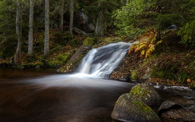 waterfall, forest, lake, autumn, autumn forest, Habo, Ravafallet, Sweden