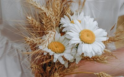 chamomile in hands, white dress, wildflowers, chamomile, wheat ears bouquet, chamomile bouquet