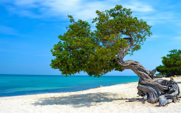 Caribbean, tree on the beach, ocean, summer travel, coast, summer coast