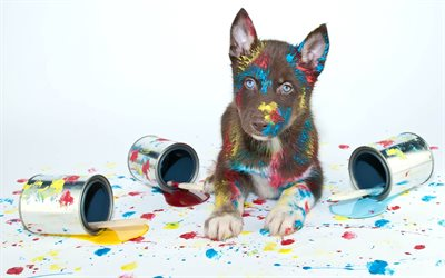 husky, puppy, cute animals, brown husky, pets, paint, artist, dogs, dog year