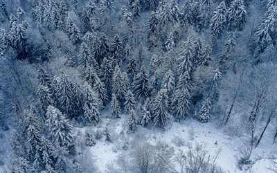 winter landscape, snow, snow-covered forest, top view, evening, forest