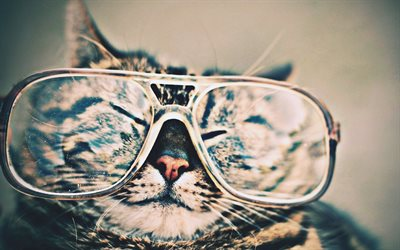 cat with glasses, close-up, funny cat, macro, cute animals, bokeh, pets, cats, domestic cat