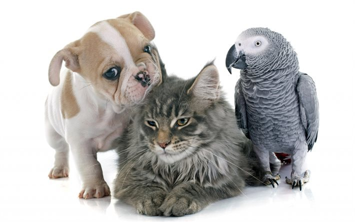 Cute animals, puppy, cat, parrot, French bulldog, gray parrot
