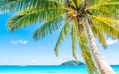 palms, summer, tropical island, seascape, coconuts on a palm tree, summer travels