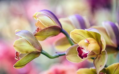 orchids, beautiful flowers, orchid branch, green orchids, tropical flowers, bokeh, floral background with orchids