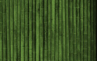 bambusoideae sticks, macro, vertical bamboo texture, bamboo textures, bamboo canes, bamboo sticks, green wooden background, bamboo