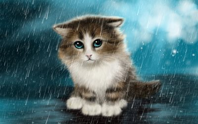 cat, kitten, rain, alone cat, cute animals