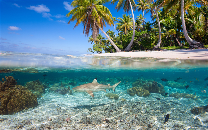 Hd Tropical Island Beach Paradise Wallpapers And Backgrounds: Download Wallpapers Underwater World Of Tropical Islands