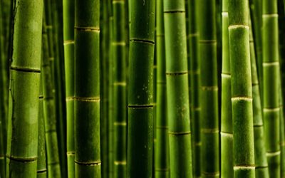 green bamboo trunks, macro, bambusoideae sticks, close-up, bamboo textures, green bamboo texture, bamboo canes, bamboo sticks, green wooden background, horizontal bamboo texture, bamboo