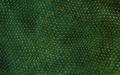green snake skin, close-up, reptile skin, snake skin textures, green snake, macro, leather backgrounds, snake skin