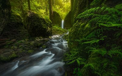 Mossy Grotto Falls, waterfall, green forest, fern, mountain river, rock, Oregon, USA