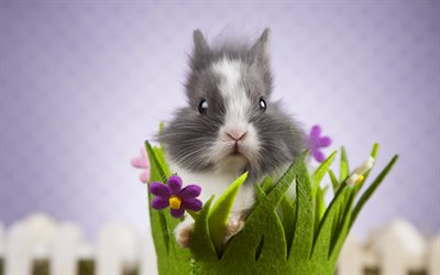 rabbit, cute animals, pets, gray rabbit