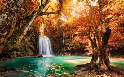 Thailand, autumn, forest, waterfall, Thai nature, Asia, beautiful nature, koi carp