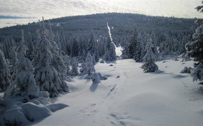 forest, winter, snow, snowy forest, winter landscape