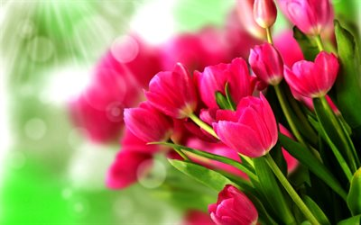 pink tulips, macro, bokeh, bouquet of tulips, pink flowers, tulips