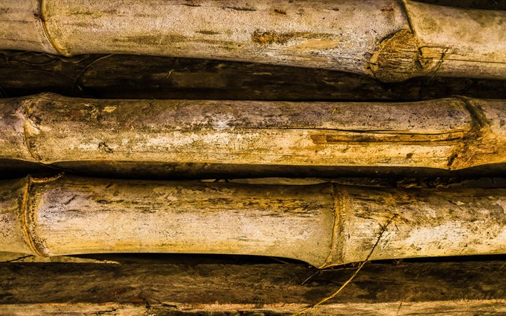 4k, bamboo sticks, close-up, brown bamboo, bamboo canes, bambusoideae sticks, macro, background with bamboo, bamboo
