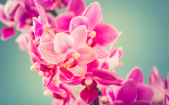 Telecharger Fonds D Ecran Rose Orchidee Orchidee De La