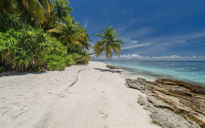 tropical forest, palm tree, beach, ocean, Seychelles, seascape, summer travels