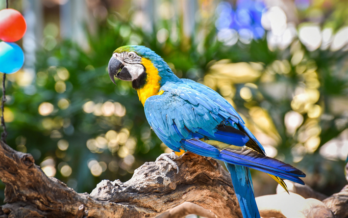 Blue and yellow macaw, beautiful parrot, blue-yellow parrot, beautiful birds, blue-and-gold macaw