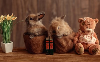 bunny, cute fluffy animals, pets, little rabbits, teddy bear