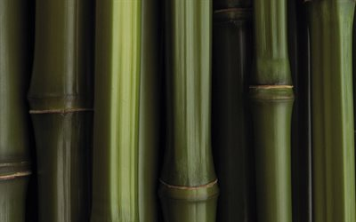 green bamboo trunks, close-up, bambusoideae sticks, macro, bamboo textures, green bamboo texture, bamboo canes, bamboo sticks, green wooden background, horizontal bamboo texture, bamboo