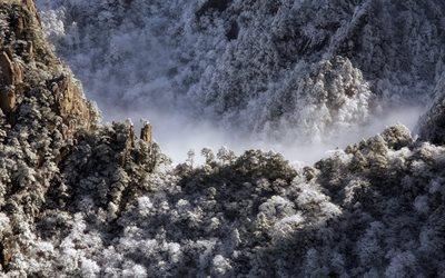 Scarica Sfondi Montagna Inverno Foresta Paesaggio Neve