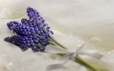 Muscari, blue flowers, small bouquet, spring flowers