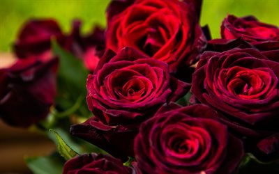 dark red roses, bouquet of roses, red roses, background with roses, beautiful dark red flowers