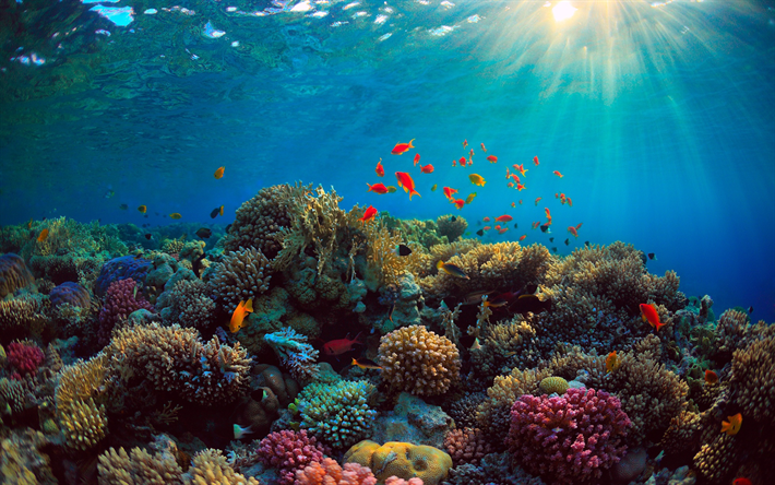 nature coral underwater landscape - photo #4