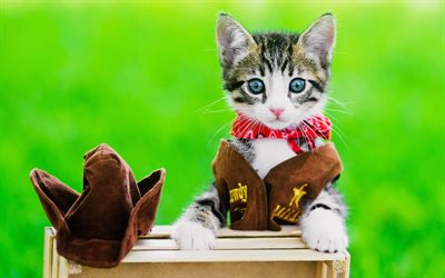small kitten, cowboy, blue eyes, cats, pets, domestic cats, cute animals, bokeh
