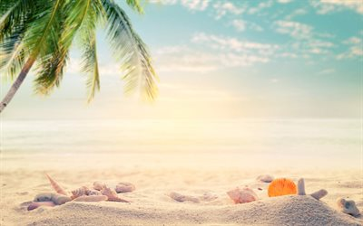tropical islands, sand, beach accessories, seashells, palm trees, starfish, travel concepts