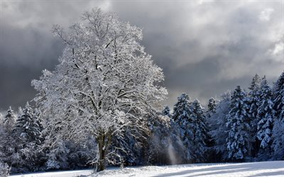 winter landscape, white tree, snow, forest, winter, snow covered tree