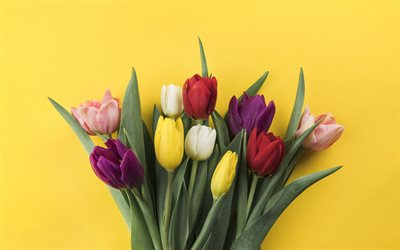 tulips, flowers on a yellow background, colorful tulips, spring, beautiful bouquet of tulips