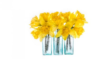 daffodils, yellow flowers, daffodils on a white background, spring flowers, bouquet of daffodils