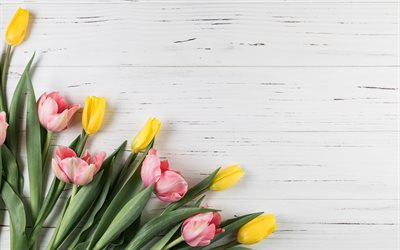 tulips on a background of boards, pink tulips, yellow tulips, tulips background, light wood texture, spring flowers, tulips