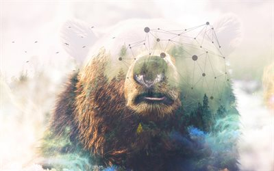 4k, grizzly, art, creative, bear, predator