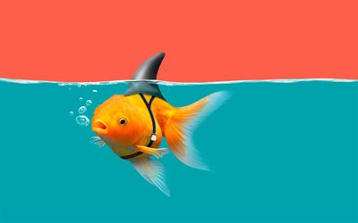 golden fish, creative art, funny shark fish, funny art, aquarium, goldfish