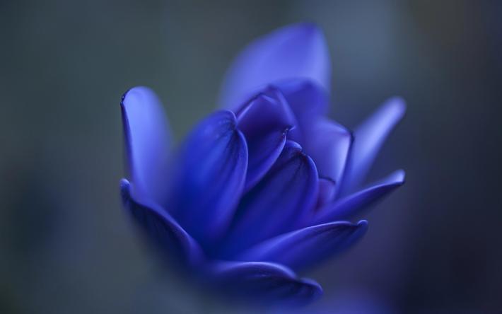 Download Wallpapers Blue Flower Blue Bud Blur Blue Floral