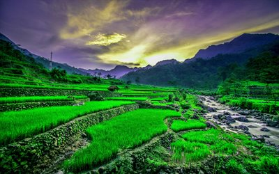 Vietnam, rice fields, river, sunset, mountains, beautiful nature, Asia, HDR