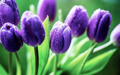 Herunterladen Hintergrundbild Frühling Blumen Für Desktop Kostenlos