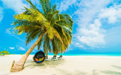 tropical island, beach, round armchair on palm tree, sand, evening, ocean, coast, summer travel, palm tree